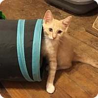 Adopt A Pet :: Jimmy - Wilmore, KY