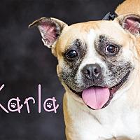 Adopt A Pet :: Karla - Somerset, PA