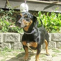 Adopt A Pet :: Josh - West Chicago, IL