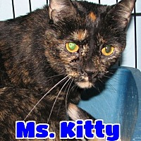Adopt A Pet :: #4292 Ms. Kitty - Lawrenceburg, KY