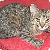 Adopt A Pet :: Angie - in foster care - Milwaukee, WI