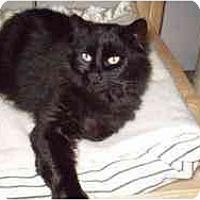 Adopt A Pet :: Zazou - Pasadena, CA