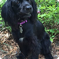 Adopt A Pet :: Whitney - Sugarland, TX