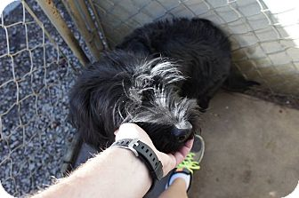 Spaniel (Unknown Type) Mix Dog for adoption in Henderson, North Carolina - Spooky