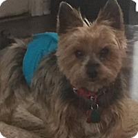 Adopt A Pet :: Daryl - Westerville, OH