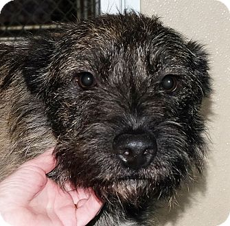 Terrier (Unknown Type, Medium) Mix Dog for adoption in Spokane, Washington - Marley