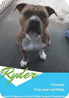 Pit Bull Terrier Mix Dog for adoption in North Kingstown, Rhode Island - Ryder