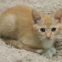 Adopt A Pet :: Tippy - LaBelle, FL