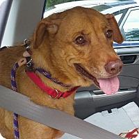 Adopt A Pet :: Lorna Diamond - N - Brewster, NY