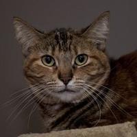 Adopt A Pet :: Enigma - Elk Grove Village, IL