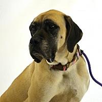 Adopt A Pet :: Valor - Goodyear, AZ