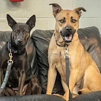 Adopt A Pet :: Regal and Royal - Toronto, ON