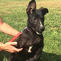 Adopt A Pet :: Jayla - Medora, IN
