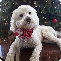 Adopt A Pet :: JACK FROST - Stockton, CA