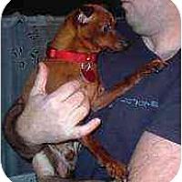 Adopt A Pet :: Dubie - Florissant, MO