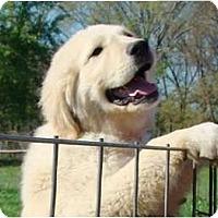 Adopt A Pet :: Wesley -Pending Adoption - Oklahoma City, OK