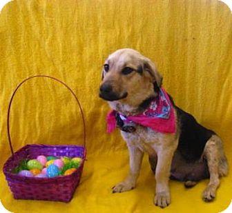 Shepherd (Unknown Type)/Basset Hound Mix Dog for adoption in Easton, Illinois - Luna