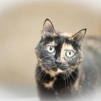 Adopt A Pet :: Sudie - Salisbury, NC