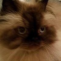 Adopt A Pet :: Princess Grace-ADOPTION PENDIN - Columbus, OH