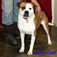 Adopt A Pet :: Joe Joe needs foster home - Union Grove, WI