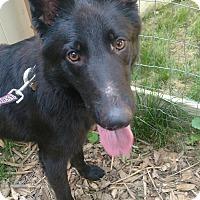 Adopt A Pet :: Kane - Baltimore, MD