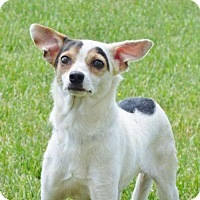 Adopt A Pet :: Marilyn Mon Woof - Pardeeville, WI
