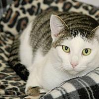 Adopt A Pet :: Willow - Adams, WI