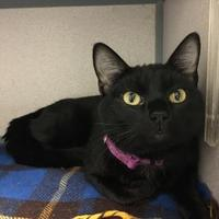 Adopt A Pet :: Binx - Fort Dodge, IA