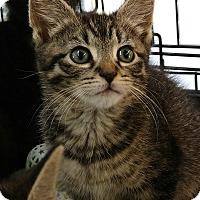 Adopt A Pet :: Hope and Tinsley - Randolph, NJ
