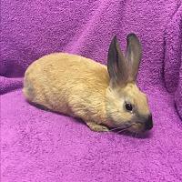 Adopt A Pet :: Jax - Idaho Falls, ID