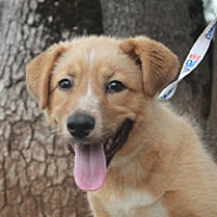 Adopt A Pet :: Mary - Jamestown, CA