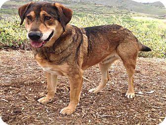 German Shepherd Dog Mix Dog for adoption in Mission Viejo, California - Ranger