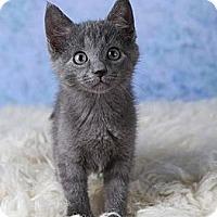 Adopt A Pet :: Boscoe - Eagan, MN