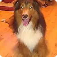 Adopt A Pet :: Ben - Bartow, FL