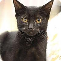 Adopt A Pet :: Sephia - Sacramento, CA
