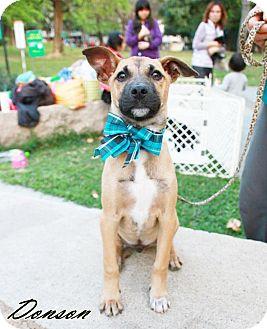 Labrador Retriever Mix Puppy for adoption in Castro Valley, California - Donson