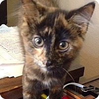 Adopt A Pet :: Trixie - Modesto, CA