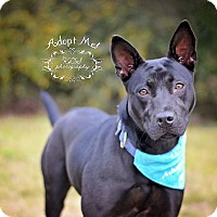 Adopt A Pet :: Kitty - Fort Valley, GA