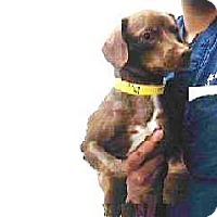 Adopt A Pet :: Dudley - Poway, CA