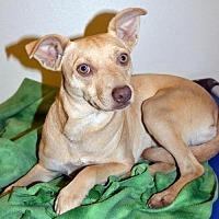 Terrier (Unknown Type, Medium) Mix Dog for adoption in Arlington, Washington - Sierra