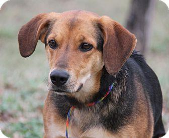 Shepherd (Unknown Type) Mix Dog for adoption in Marietta, Ohio - Muffy (Spayed)