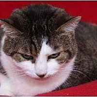 Adopt A Pet :: Taffy - Eldora, IA