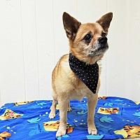 Adopt A Pet :: Montana - Tavares, FL