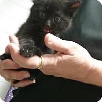 Adopt A Pet :: Jinx - Paducah, KY