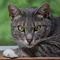 Adopt A Pet :: Jose - Wayne, NJ