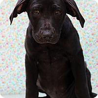 Adopt A Pet :: Alfonso - Waldorf, MD