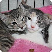 Adopt A Pet :: Jenn and Jaclyn - Foster Me? - Ephrata, PA