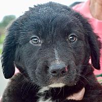 Adopt A Pet :: Lance - CRANSTON, RI