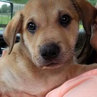 Adopt A Pet :: Pupperton - Gainesville, FL