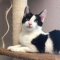 Adopt A Pet :: Azteca - Riverside, CA